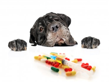 Specialty Meds for Your Pet
